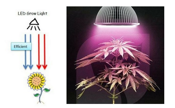 LED Grow Lights Basics: To Be A Successful Indoor Grower