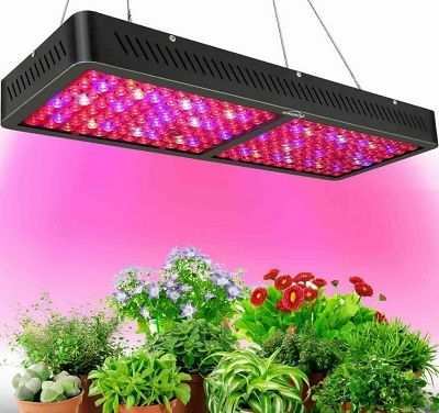 Do LED Grow Lights Work